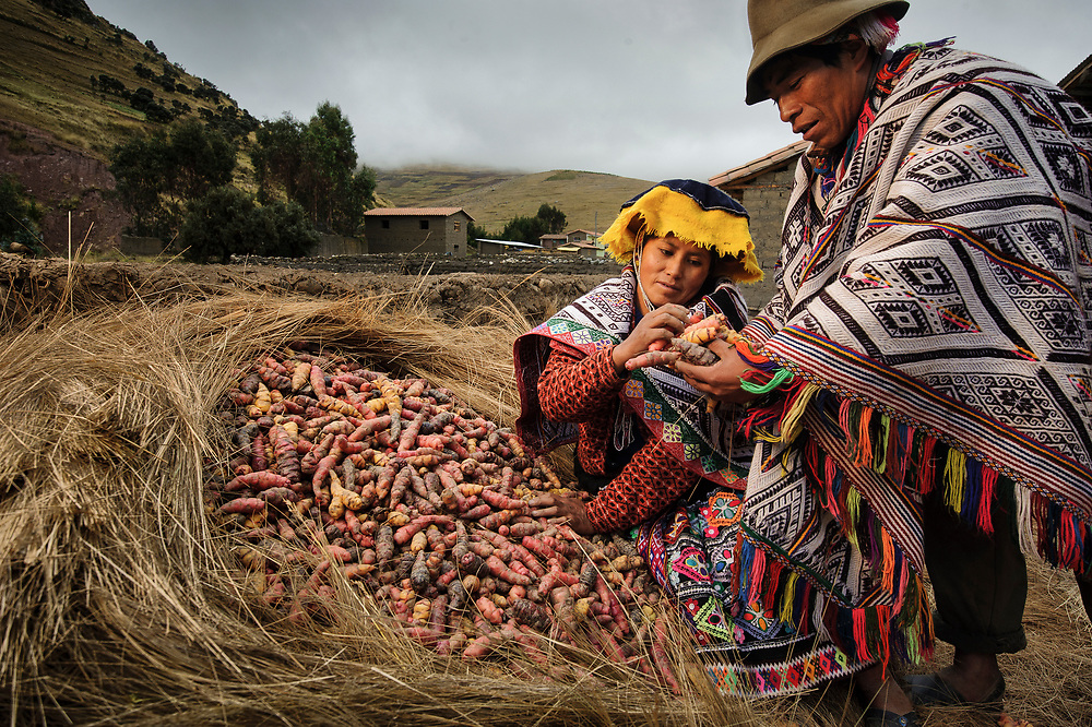 Mariano Sutta Apucusi. At their home in Pampallacta.  Oca is a tuber relative of the potato, grown in the high Andes.  Oca is part of the vast biodiversity of some 1,300 varieties of potatoes and tubers grown here.