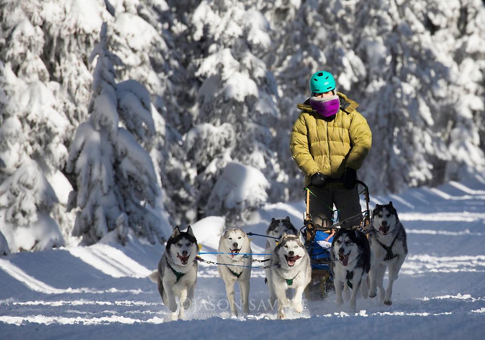 Dog Sledding Lost Trail Montana.