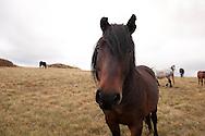 Livno Piana del Monte Cincar. Qui non è facile trovare uno degli ultimi e rari branchi di cavalli selvaggi in europa.