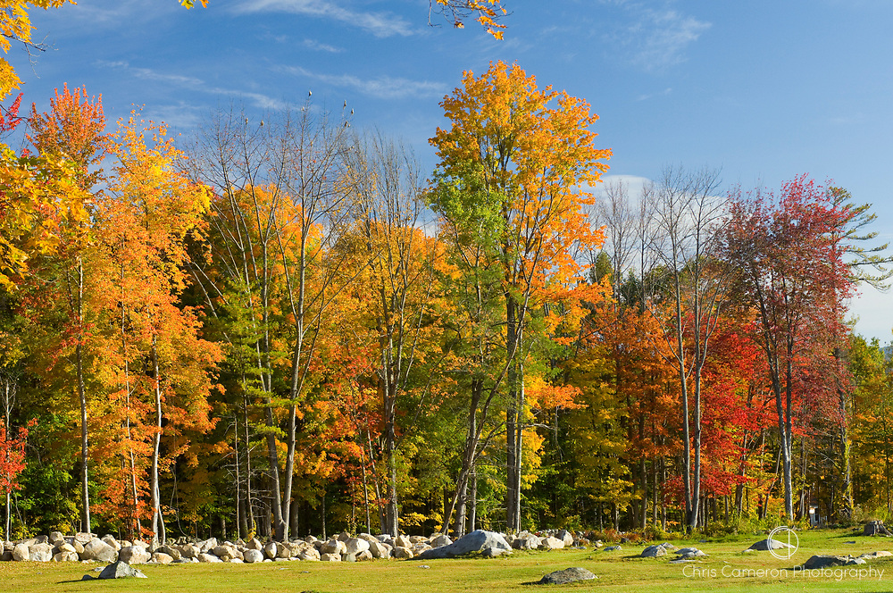 Trees in their fall colours near Wickwas lake New Hampshire in New England, USA