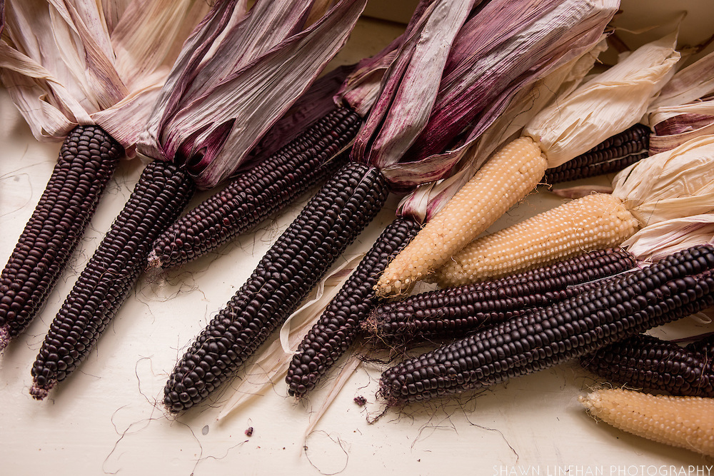Peace, No War purple flour corn