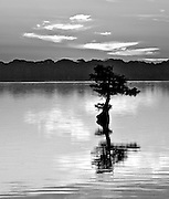 A peaceful sunrise done in black and white at Reel Foot Lake.