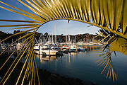 a curving plam frond provides a natural frame around this scenic view of a marina at tutukaka, northland, new zealand
