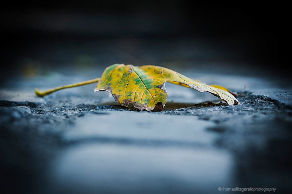 A close up shot of a yellow and green fallen leaf on some cobble stones