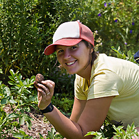 A young, healthy, twenty-something woman kneeling in the garden, holding up a freshly dug potato, which is still covered with dirt. She is smiling at the camera and is wearing a red and white ball cap and yellow tee shirt.