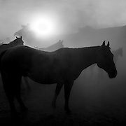 Waiting for the Sun, Eatons' Ranch, Wolf, Wyoming