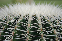 cactus plant close up