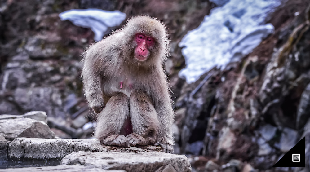 Japan, Jigokudani, Snow Monkeys