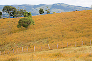 Munhoz_MG, Brasil...Paisagem rural com arvores...The rural landscape with trees...Foto: LEO DRUMOND / NITRO....