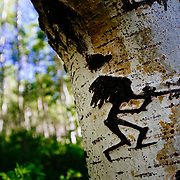 The Kokopelli figure carved on an aspen tree in the forest near Moab, Utah.