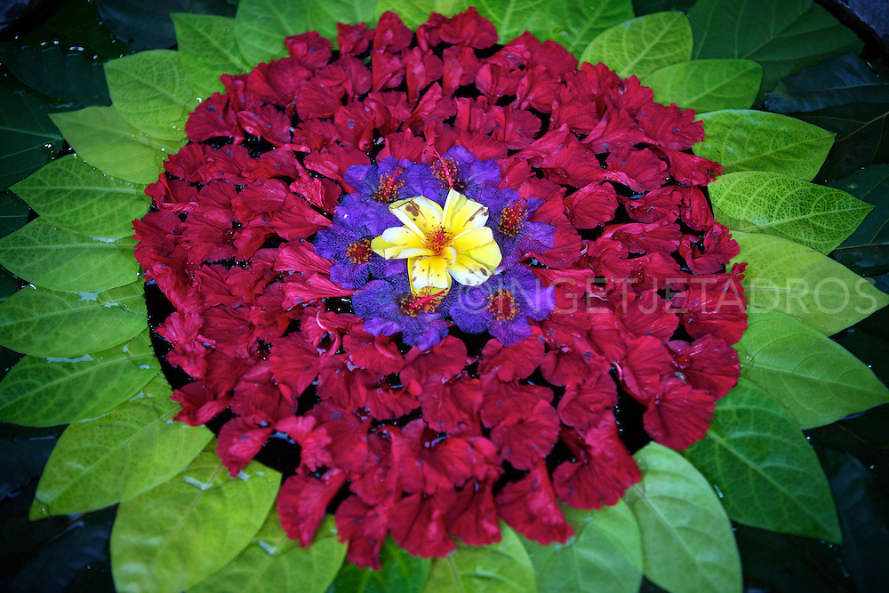 Flower petals displayed in a large stone pot.<br />