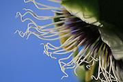 Nature, Plant Life, Tropical