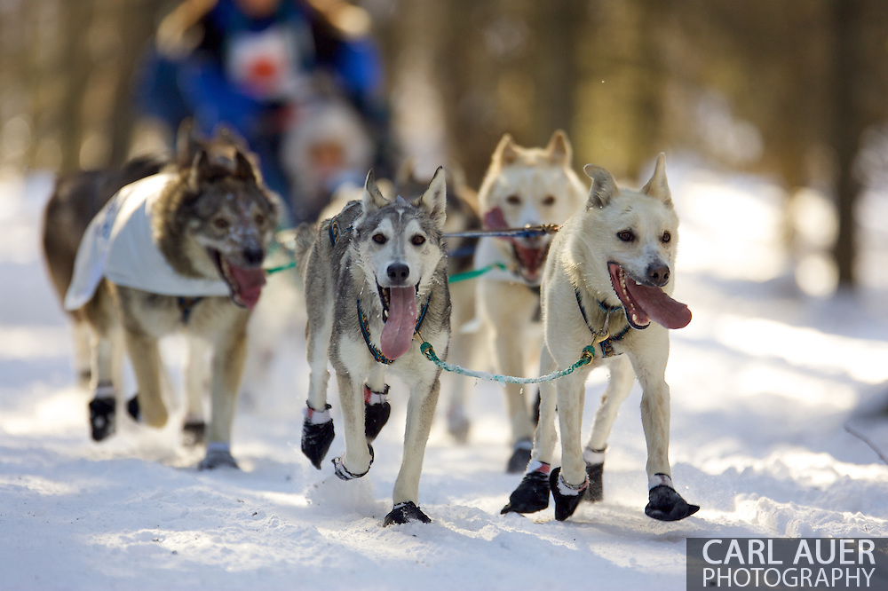 March 7th, 2009:  Anchorage, Alaska - The dog team of Cindy Gallea from Seeley Lake, Montana pulls through the Behm Lake woods during the 2009 Iditarod Ceremonial Start.