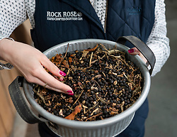 Detail of botanics that are ingredients in Rock Rose Gin in caithness on the North Coast 500 tourist motoring route in northern Scotland, UK