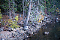 Scenic image of trees and shoreline on Fallen Leaf Lake, CA.