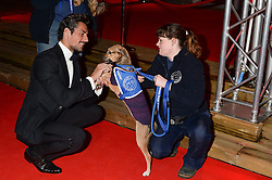 DAVID GANDY and Poppy the dog at the Collars & Coats Gala Ball in aid of Battersea Dogs & Cats Home held at Battersea Evolution, Battersea Park, London on 7th November 2013.