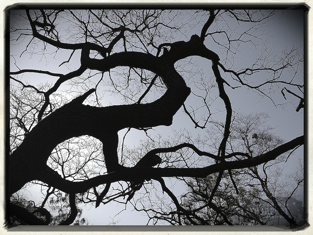 Gary Cosby Jr.  iPhone photographs<br /> Ominous limbs on a tree in Florida.