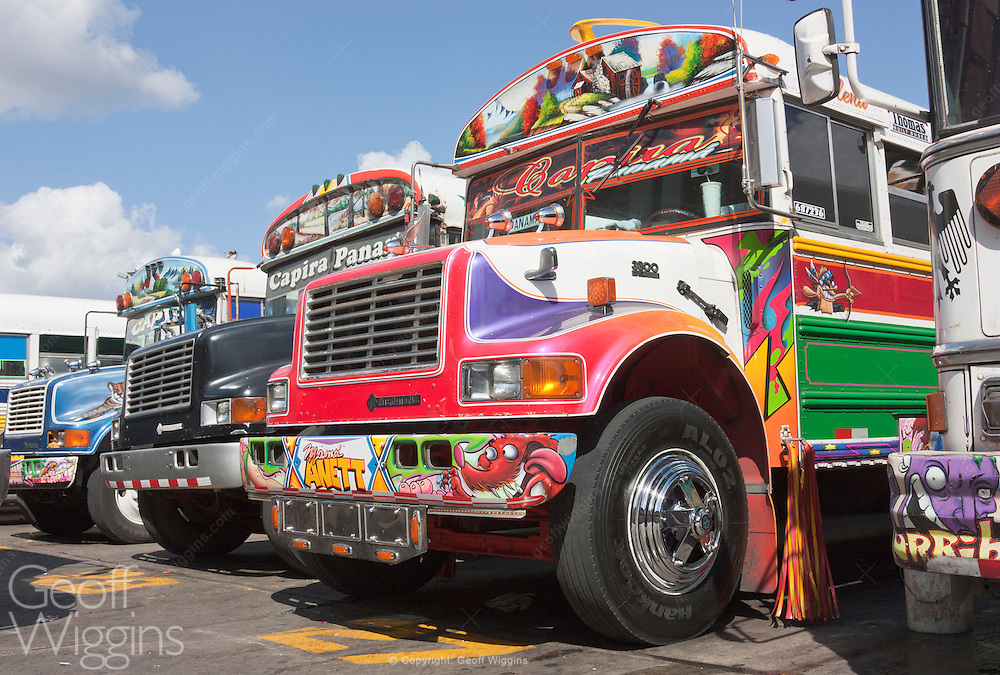 Brightly decorated ex US school buses (chicken buses) at Panama City bus station, Panama, Central America