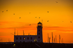 © Licensed to London News Pictures. 02/04/2020. Scarborough UK. Birds fly over Scarborough light house as the sky turns a golden colour at dawn this morning on the Yorkshire coast. Photo credit: Andrew McCaren/LNP