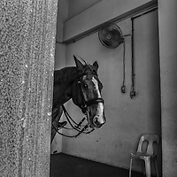Horse of the mounted royal guard peek through at the entrance to Royal Palace  Kuala Lumpur, Malaysia.