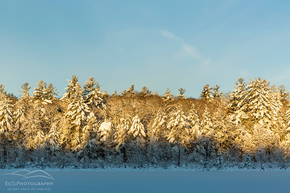 Round Pond in winter at sunrise. Barrington, New Hampshire.