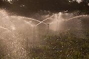 Buritis_MG, Brasil.<br /> <br /> Plantacao de milho em Buritis, Minas Gerais.<br /> <br /> Cultivation of cor in Buritis, Minas Gerais.<br /> <br /> Foto: LEO DRUMOND / NITRO