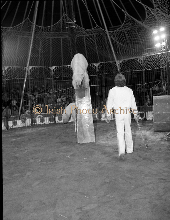 08.09.1984<br /> 09.08.1984.<br /> 8th September 1984.<br /> Chipperfield's circus performed before packed houses in Mullingar, Co Westmeath.<br /> <br /> Image shows the polar bears beginning their performance,under the watchful eye of a trainer. Many of the audience have a very up-close view. One of the bears begins to come down a slide.