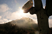 Winter storms brought rain to Tucson Mountain Park, Sonoran Desert, Tucson, Arizona, USA.