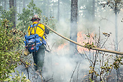 Managed forestry burn for quail conservation.