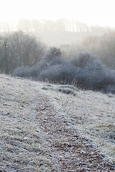 Seedheads in the chalk grassland at Strawberry Banks Nature Reserve, Gloucestershire on a frosty winter's morning