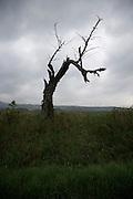 dead tree against a dark gray sky