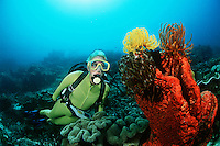 Raja Ampat Indonesia Pacific Ocean female scuba diver swimming by coral reef