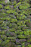 Mossy green rocks in a wall in ubud, bali, indonesia