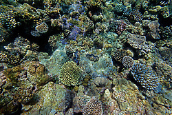 Colourful corals and clams on Mermaid Reef.