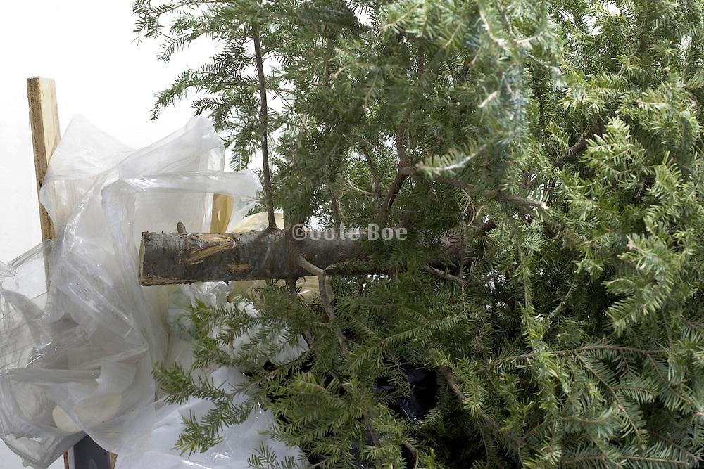 trashed christmas tree