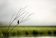 A bird sits on a branch overlooking Flat Creek at the National Elk Refuge outside Jackson, WY. ©Brett Wilhelm