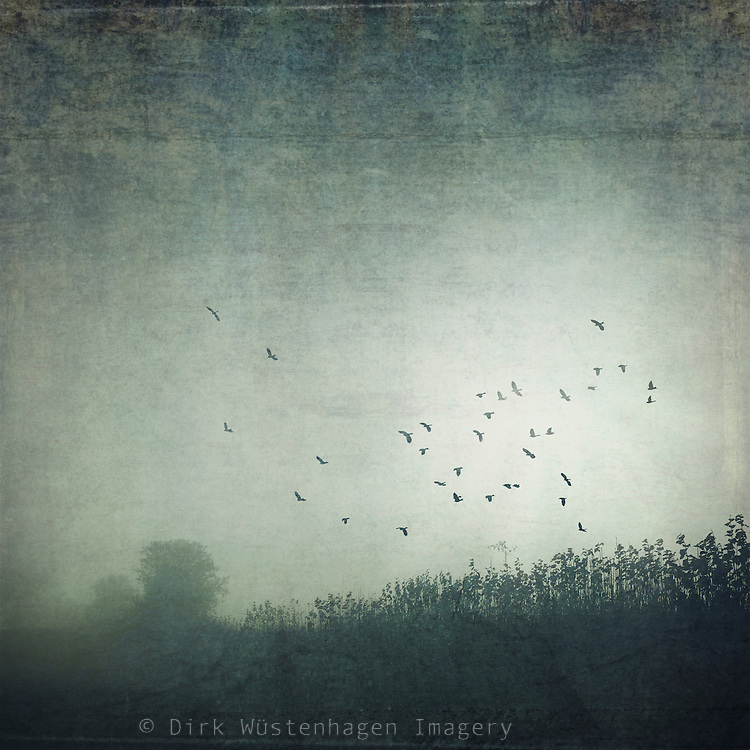 Fields and hedge on a misty Novermber morning - texturized photograph
