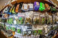"""Different strains of pot available at the retail """"recreational"""" sales counter at Medicine Man Denver is the single largest legal medical and recreational marijuana dispensary in Denver, Colorado USA. Their 20,000 sq. ft. facility will soon double in size. Radio frequency ID tags and 65 video cameras allow the State of Colorado to track inventory through the growing process and all plant weight is accounted for. Medicine Man won the High Times' Cannabis Cup for best sativa (Jack Herer). 20-30 strains are available for sale daily."""