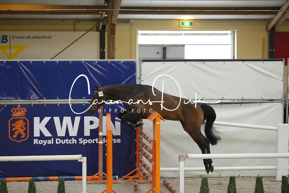 090 - Garetto<br /> Vrijspringen 3 jarige Merries<br /> KWPN Paardendagen - Ermelo 2014<br /> © Dirk Caremans