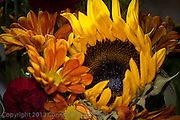Sunflower and chrysanthemums in a Thanksgiving display