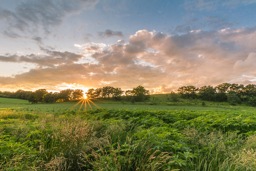 The sun's rays lower like eyelashes over Wisconsin pasture.