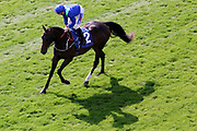 DARK VISION (2) ridden by David Probert and trained by Mark Johnston goes to post with his shadow before winning the John Smiths Median Auction Novice Stakes over 6f (£15,000) at York Racecourse, York, United Kingdom on 14 July 2018. Picture by Mick Atkins.