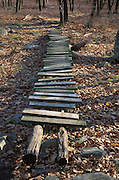 Old wooden walkway over fallen leaves