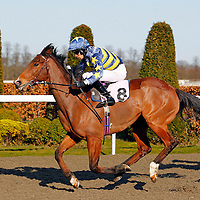 Mambo Spirit and Sean Levey winning the 5.00 race