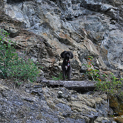 Rocky, Ross Lake National Recreation Area, North Cascades National Park, US