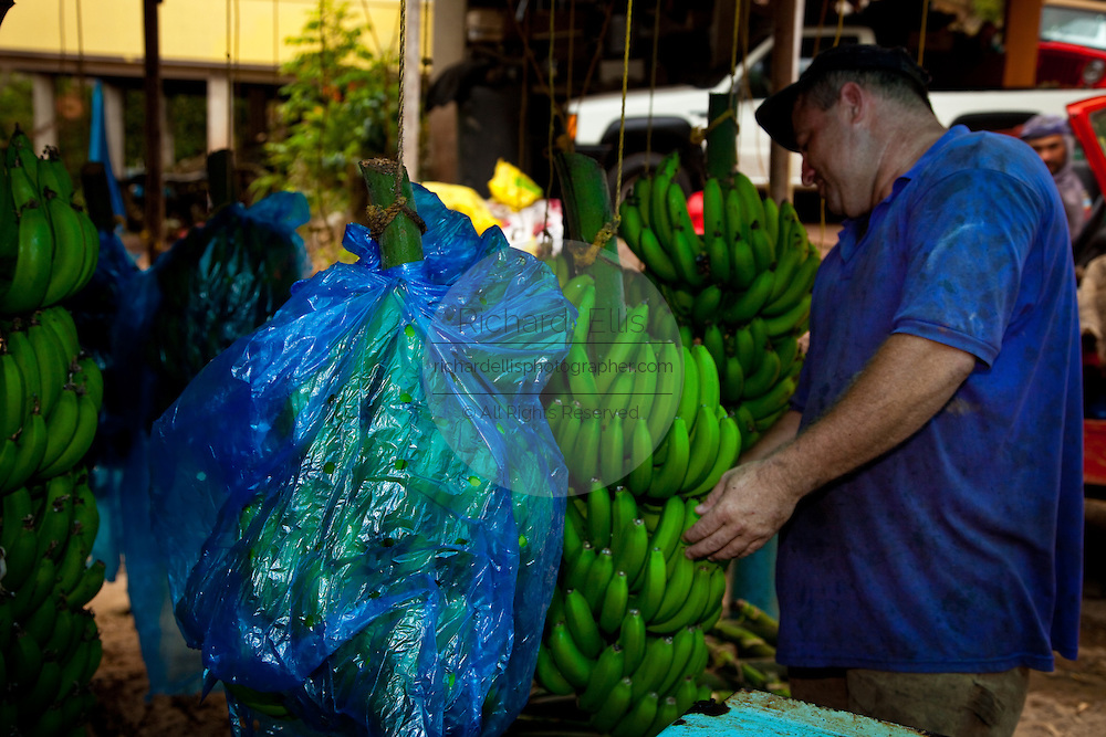 A worker processes bananas at a plantation in Adjuntas Puerto Rico.