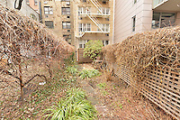 Garden at 331 West 14th Street