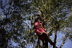 61139417<br /> A girl of the Ngabe Bugle ethnic group plays on a tree in Kiad community in the Ngabe Bugle indigenous region, 450 km west of Panama City, capital of Panama, on Feb. 24, 2014. The Ngabe Bugle indigenous region is located in the western region of Panama, and covers an area of 6,968 square km, with 91 per cent of its population living in extreme poverty. Native leaders of the Ngabe Bugle region declared a national alert , because of the eviction notice issued by a company which is developing the hydro-electric project Barro Blanco . The project will use the water from Tabasara river in Chiriqui province, which will permanently flood nearly six hectares that contain native dwellings,  Monday, 24th February 2014. Picture by  imago / i-Images<br /> UK ONLY