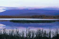Cattails in Cherry Pond.  Pondicherry National Wildlife Refuge.  White Mountains - Presidential Range is in the distance.  National Natural Landmark. Jefferson, NH