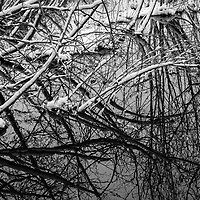 https://Duncan.co/snow-covered-branches-and-reflections